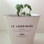 Garden: Urban Barn Plant Pots