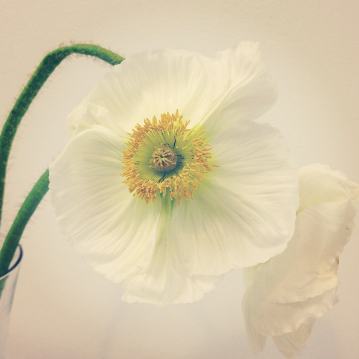 white-poppy-Living Fresh Studio