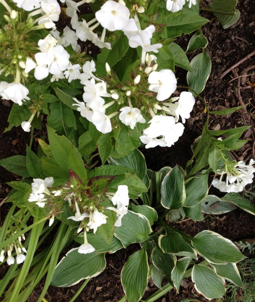 flowers-garden-White-Cabana