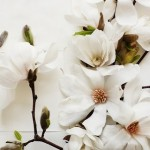 Flowers: Magnolias, Dahlias, Tulips – Oh, My!