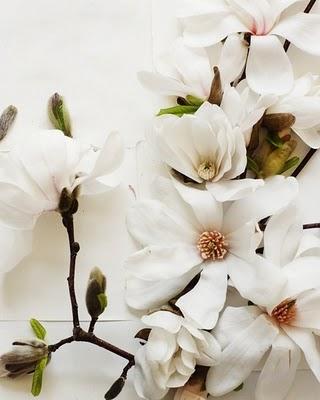 white-magnolia-kari-herer