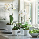 The Friday Five: White Orchid Plants
