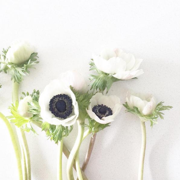 Anenome-Tim-flowers-DesignMaze