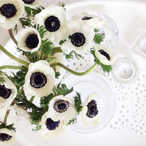 Anenome-WhiteCabana-flowers