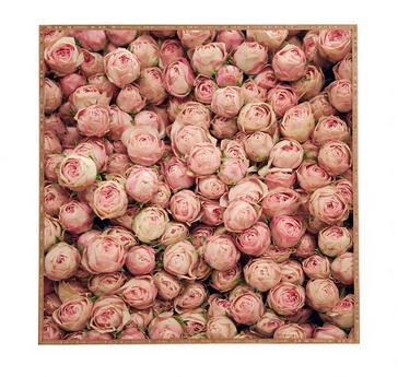 roses-art-catherine-mcdonald-target